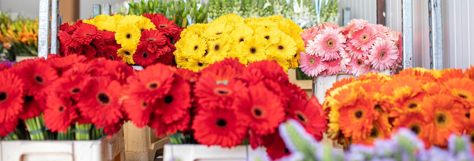 Flores para decorar: ¿cuales elegir?