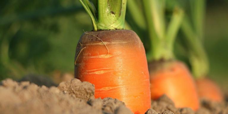hortalizas recomendadas para un dieta saludable