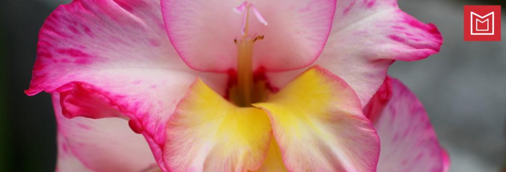 Flores-de-octubre-para-el-dia-de-Todos-los-Santos
